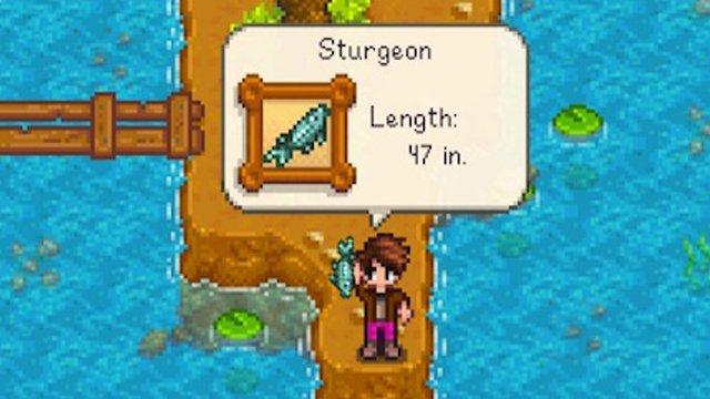 How to Catch the Sturgeon Stardew Valley